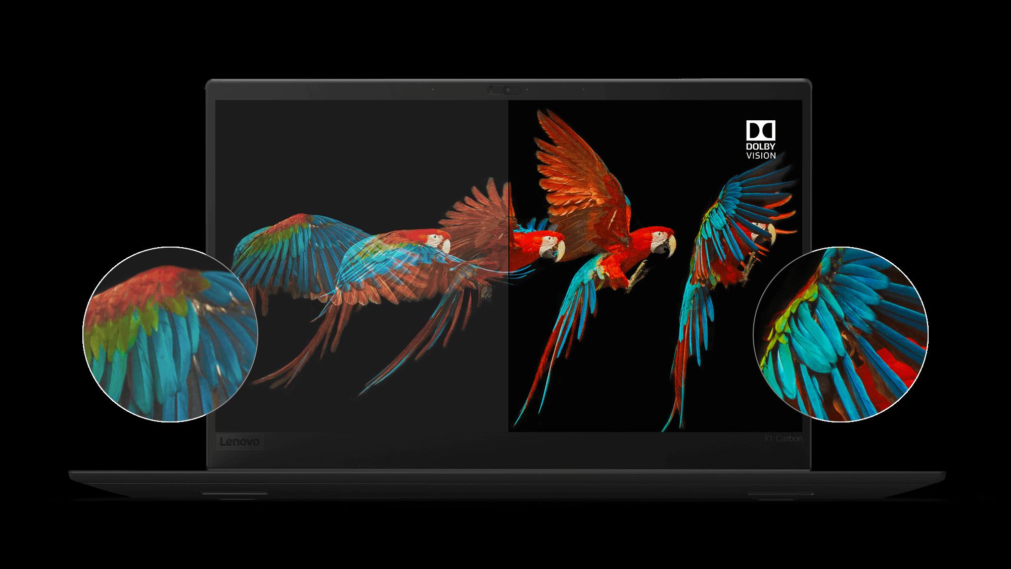 Pantalla Lenovo ThinkPad X1 Carbon HDR con Dolby Vision, que muestra detalles sorprendentes y precisión de color de las alas de un loro en vuelo.