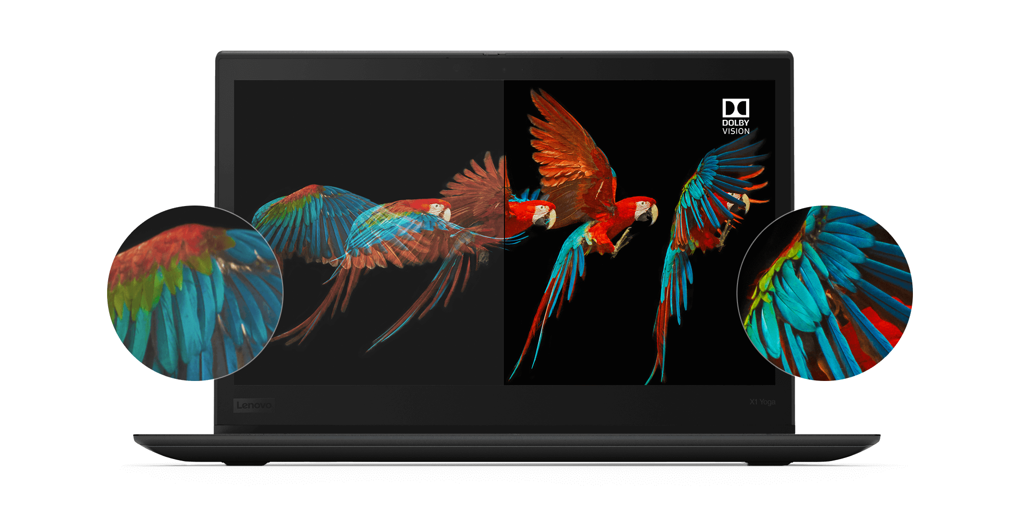 Lenovo ThinkPad X1 Yoga HDR display with Dolby Vision, showing amazing detail and color accuracy of a parrot's wings in flight.